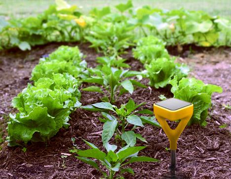 Yves-Behar-Edyn-gardening-app_dezeen_468_1