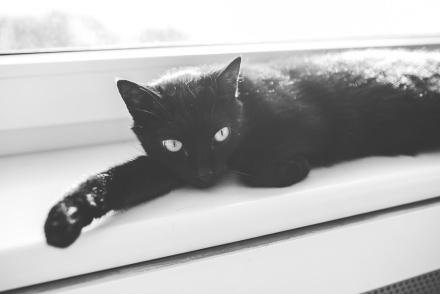 kaboompics.com_Black cat